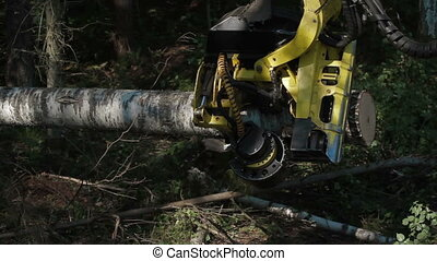 Harvester working in a forest Harvester pulls tree A...