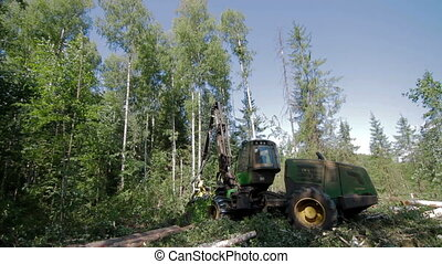 Forest Harvester in action - cutting down tree. Harvester...