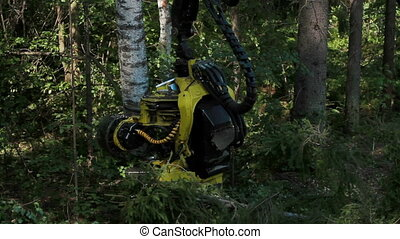 Harvester working in a forest. Harvester pulls tree. A...