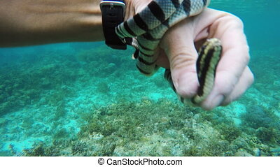 Man scuba diver in tropical sea - Sea snake on a man's...