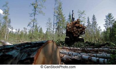 Feller Buncher drives through a clearing in forest - Feller...