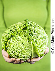 Hands holding green cabbage head