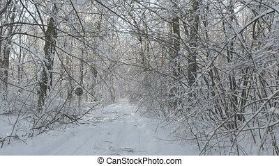 Walking through the winter forest