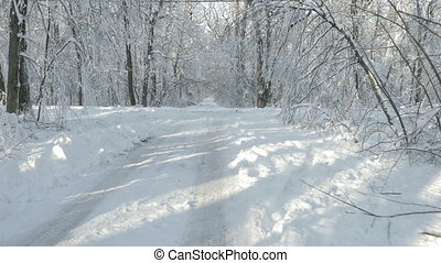 Walking through the winter forest - Walking through the snow...
