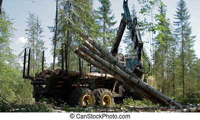 Mechanical Arm loads tree trunks - Feller Buncher loaded...