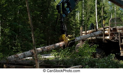 Mechanical Arm loads tree trunks in forest - Feller Buncher...