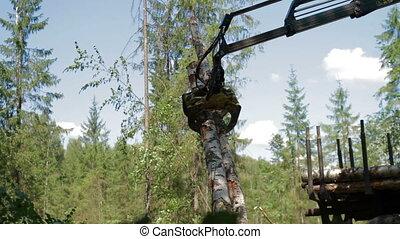 Mechanical Arm Feller Buncher loads tree trunks - Feller...