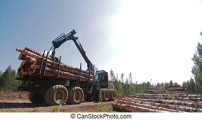 Feller Buncher unloads tree trunks - Feller Buncher unloads...