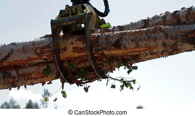 Mechanical Arm of Feller Buncher unload tree trunk - Feller...