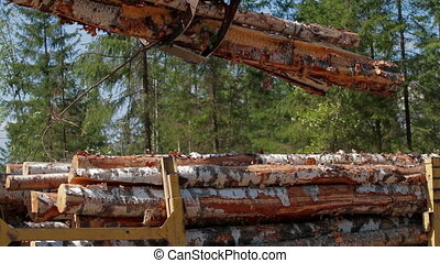 Logging Truck at Lumber Mill loaded with logs and trees....