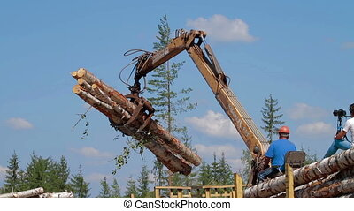 Logging Truck at Lumber Mill loaded tree trunk - Logging...