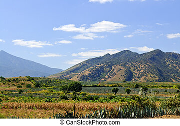 Landscape in Jalisco, Mexico - Lanscape with agave cactus...