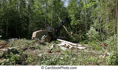 Feller Buncher saws a freshly chopped tree trunk - Harvester...