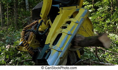 Feller Buncher sawing a freshly chopped tree trunk -...