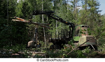 A specialized Feller Buncher saws tree trunks