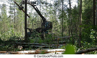 Mechanical Arm Feller Buncher loads tree trunk - Feller...