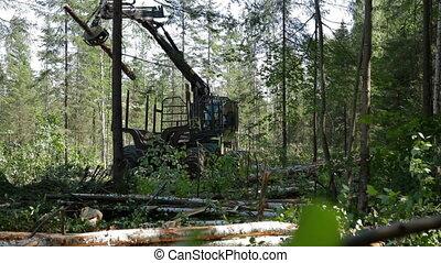 Mechanical Arm Feller Buncher loads tree trunk - Feller...