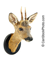 Roe deer trophy on a wooden plate