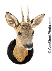 Young roe deer head - The stuffed head of a young roe deer