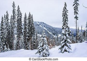 Winter Landscape in the Shuswap - Winter landscape on the...