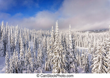 Snow Covered Trees in the Forest - Winter landscape on the...