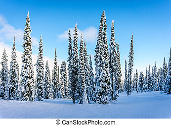 Snow and Ice Covered Trees - Winter landscape on the...