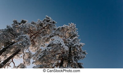 Camera rotates and removes big trees and the blue sky during the winter period.