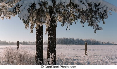 Camera moves from right to left and takes a beautiful winter...