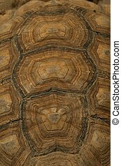 turtle shell - pattern of a turtle shell