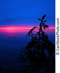 Great Lakes Sunset Silhouette - Silhouetted pine needles...