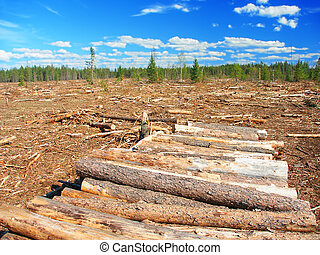 Northwoods Michigan Logging Operation - Large area of...