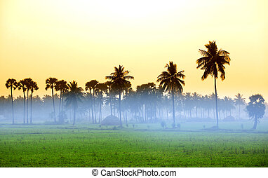 Paddy fields in India
