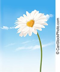 Daisy with heart shaped middle. Valentine's Day background. Vector.