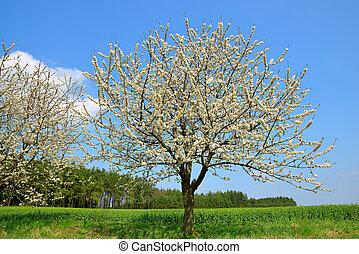 Flowering tree on meadow Spring season