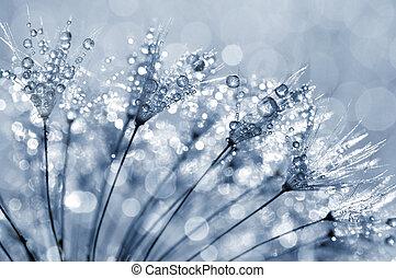 Dewy dandelion flower close up