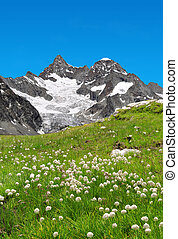 Beautiful mountain Gabelhorn in the foreground blooming...