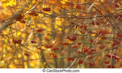 autumn branches panorama