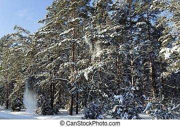 nieve, árboles, pino