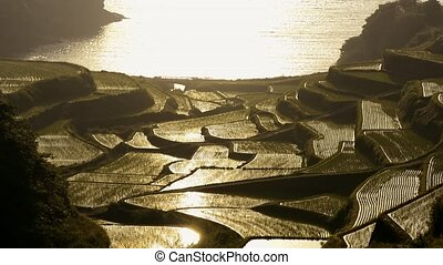 Seashore rice terraces - Seashore terraced rice fields in...