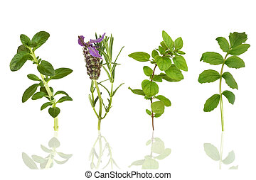 Herb Leaf Selection - Herb leaf selection of peppermint,...