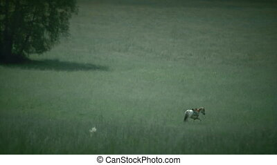 eagle and horse - Two slow motion shots of a horse and...