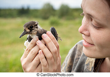 bird a lapwing - the girl holds in hand a bird a lapwing