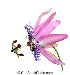 Passion Flower Beauty