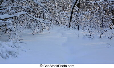 Beautiful snow covered tree branches in winter park Vertical...
