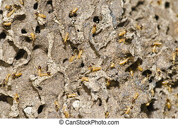 Termites Colony in the Nature, Photo of