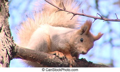 squirrel on the twig