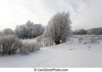 Winter Park , snow. - trees in the park in winter. the...