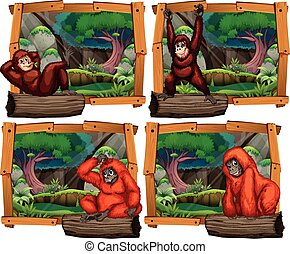 Four scenes of monkey in the jungle