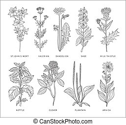 Medical Herbs Vector Set. Hannddrawn Style - Medical Herbs...