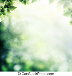 After the rain. Beauty foggy day in the forest, abstract natural backgrounds